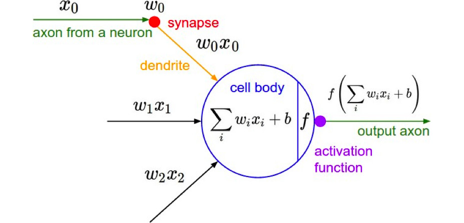 Neuron mathematical model